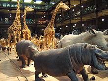 220px-Grande_galerie_evolution_-_musee_histoire_naturelle